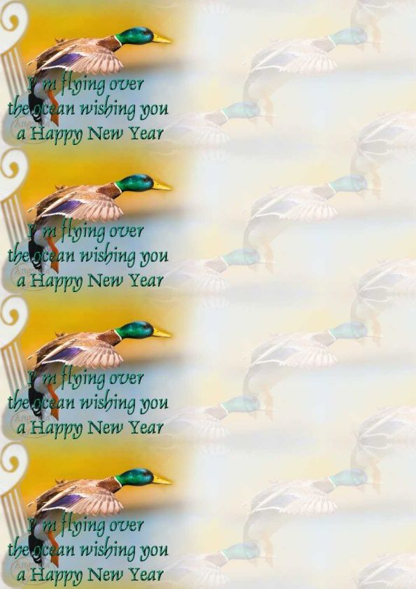 I'm flying over the ocean wishing you a Happy New Year  im_flying_happy_new_year_colvert_image0171715_00_leo