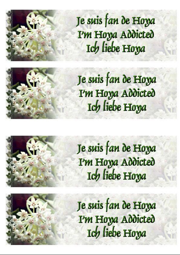 Hoya Australis Incredimail &amp&#x3B; Papier A4 h l &amp&#x3B; outlook &amp&#x3B; enveloppe &amp&#x3B; 2 cartes A5 &amp&#x3B; signets 3 langues + hoya addicted hoya_australis_jose_00