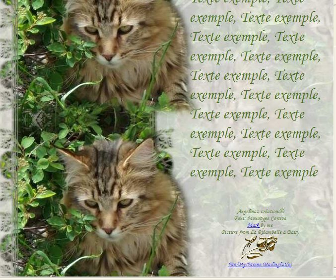 Maine Coon Incredimail &amp&#x3B; Papier A4 h l &amp&#x3B; outlook &amp&#x3B; enveloppe &amp&#x3B; 2 cartes A5 &amp&#x3B; signets 3 langues     chat_mainecoon_daisy_gedc0335_00