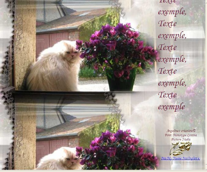 Chat blanc avec Azalée Incredimail &amp&#x3B; Papier A4 h l &amp&#x3B; outlook &amp&#x3B; enveloppe &amp&#x3B; 2 cartes A5 &amp&#x3B; signets 3 langues     chat_nadia_img_0522_00