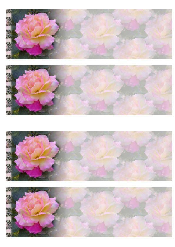 Rose rose sous la pluie Incredimail &amp&#x3B; Papier A4 h l &amp&#x3B; outlook &amp&#x3B; enveloppe &amp&#x3B; 2 cartes A5 &amp&#x3B; signets   rose_rose_0000_mp