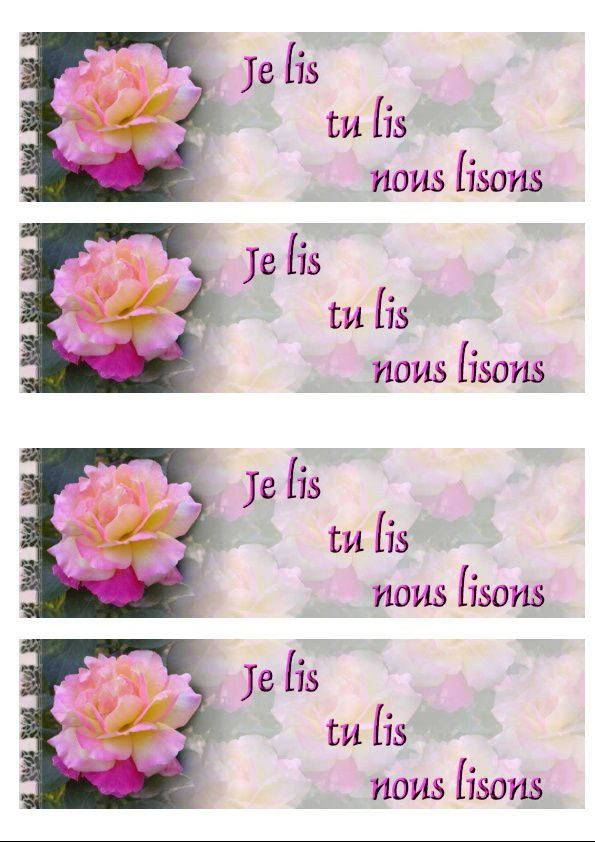 Rose rose sous la pluie Incredimail &amp&#x3B; Papier A4 h l &amp&#x3B; outlook &amp&#x3B; enveloppe &amp&#x3B; 2 cartes A5 &amp&#x3B; signets   rose_rose_0000_mp