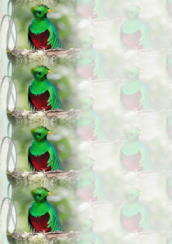 Quetzal Incredimail &amp&#x3B; Papier A4 h l &amp&#x3B; outlook &amp&#x3B; enveloppe &amp&#x3B; 2 cartes A5 &amp&#x3B; signets 3 langues    ois_quetzal_12_micheline_00