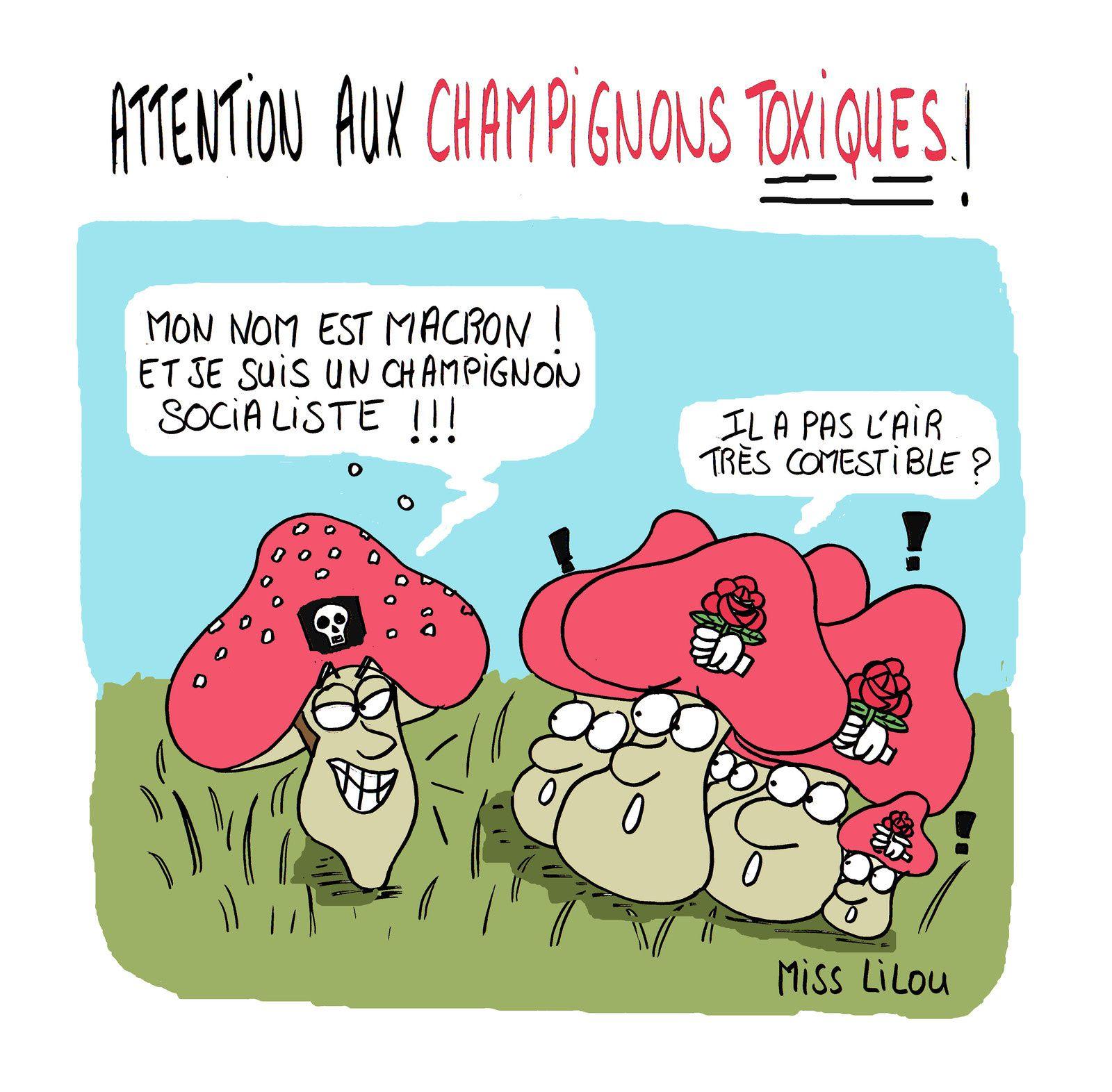 Attention aux champignons toxiques !