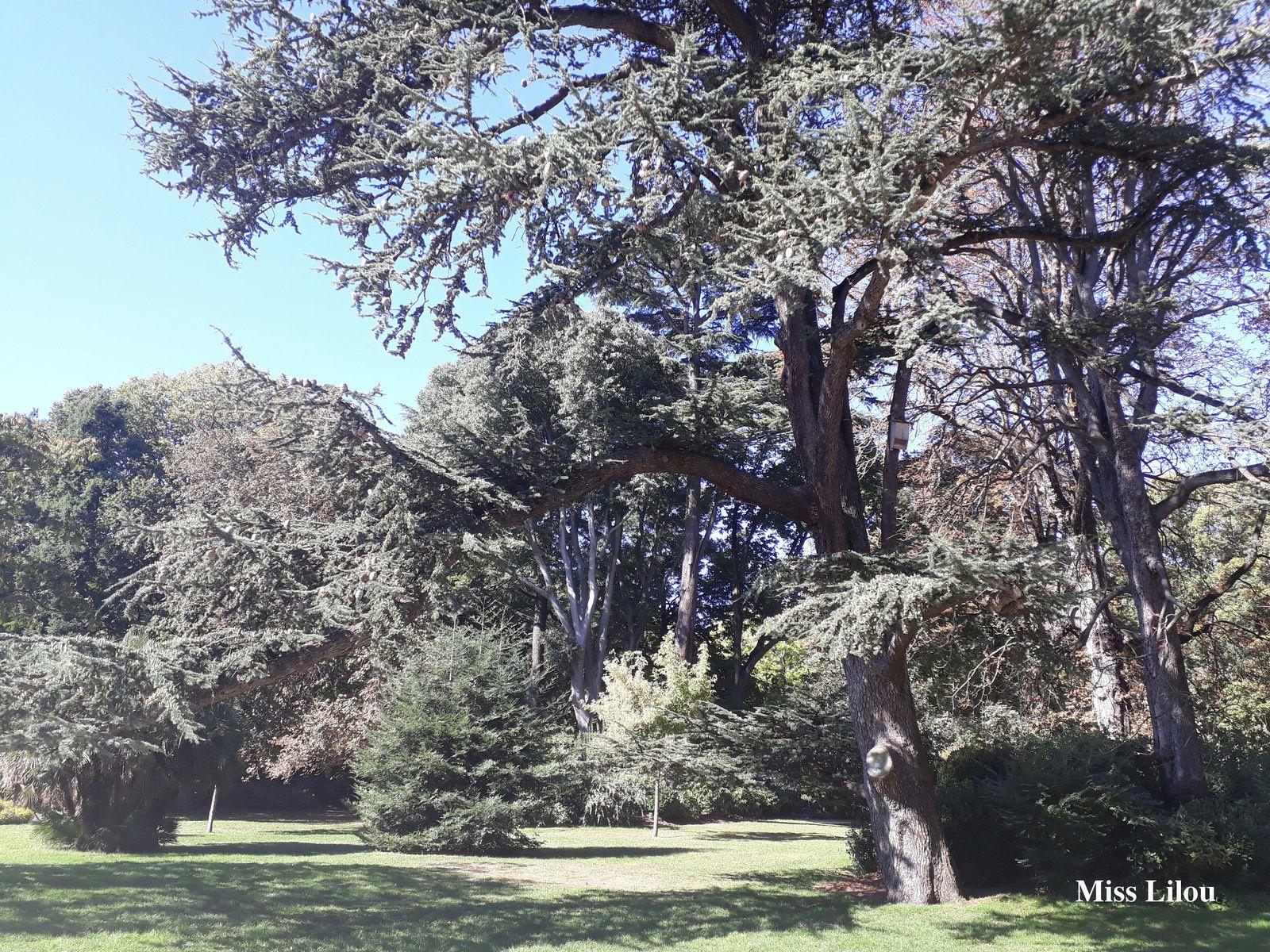 Ballade avec Miss Lilou : le Jardin des Plantes et le Jardin du ...