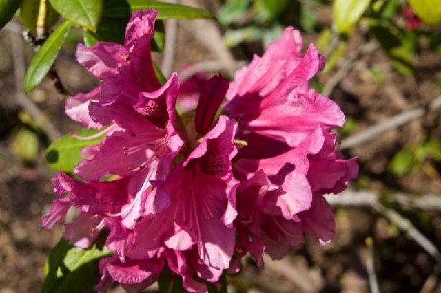 parc floral Apremont-sur-Allier