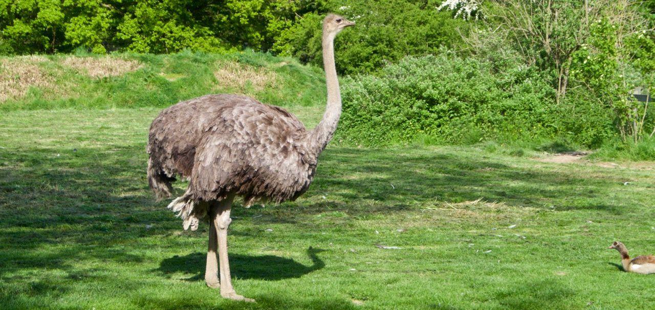 Parc des oiseaux de Villars-les -dombes du jeudi 5 au samedi 7 mai 2016