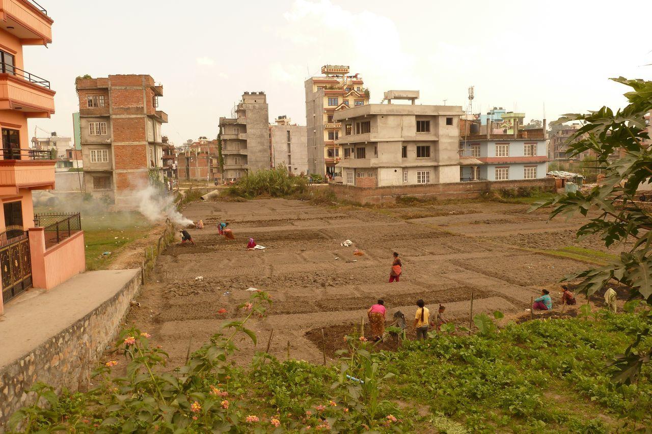 Entre les immeubles le moindre lopin de terre est cultivé