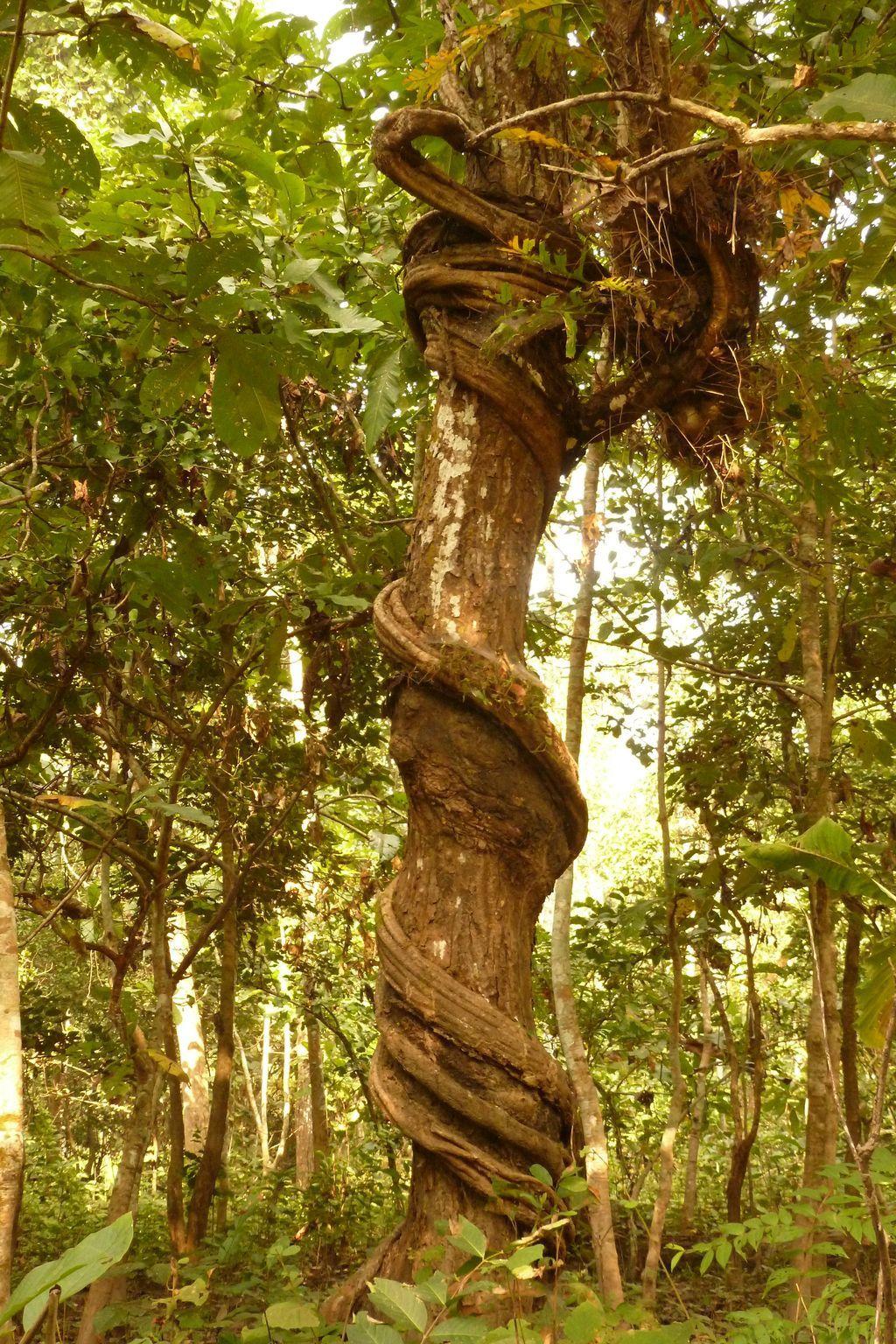 Réserve de Chitwan