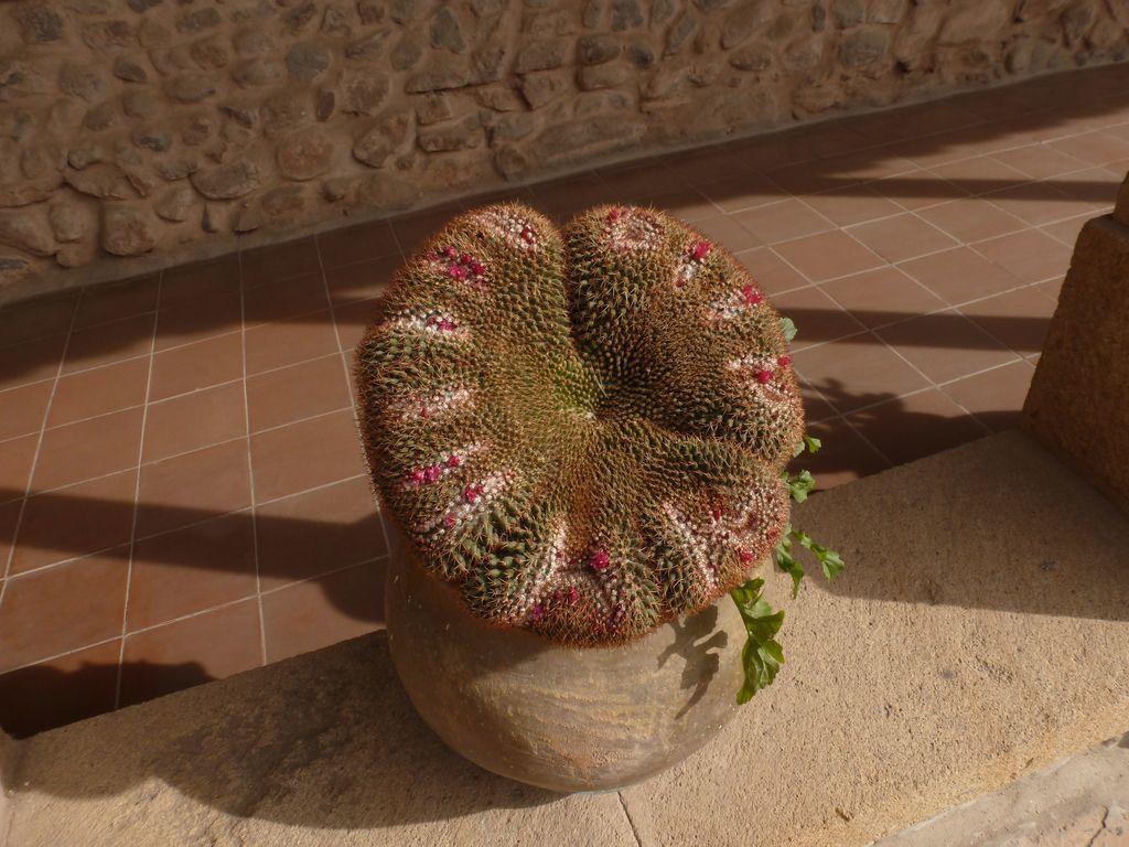 un des magnifiques cactus que l'on peut admirer sous les cloîtres