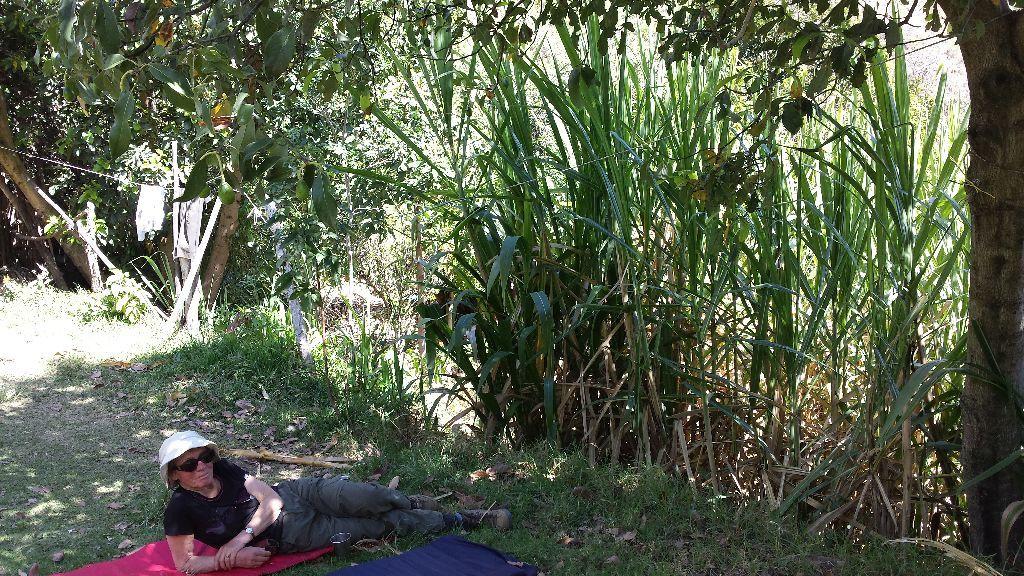Il fait une chaleur éprouvante et à 14 h nous faisons une grande pose jusqu'à 17 h au village où nous avons dormis la première nuit. nous en profitons pour faire des photos de  cette végétation équatoriale à 2000 m d'altitude. Ici de la canne à sucre