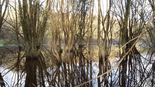 Au gré de mes randos dans la vallée du Cens à Nantes