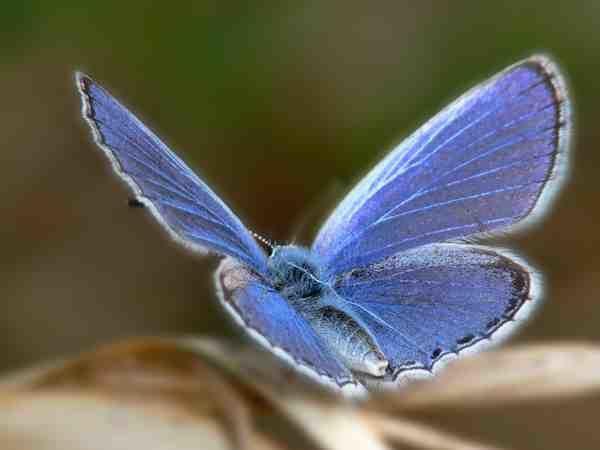 Ne suis-je pas ce papillon – Victor Varjac