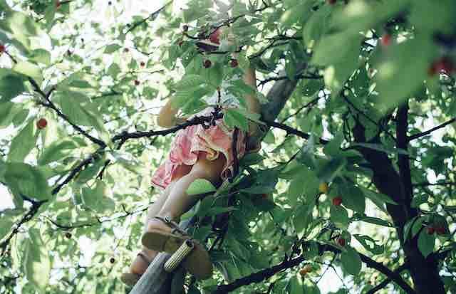Le cerisier – Michèle Freud