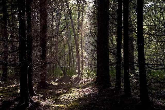 Ombre et lumière – Luce Péclard