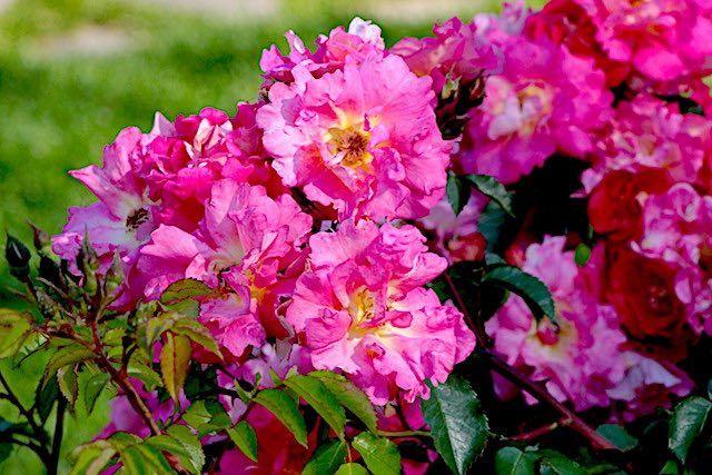 Cueillez ces quelques fleurs – Robert Bonnefoy