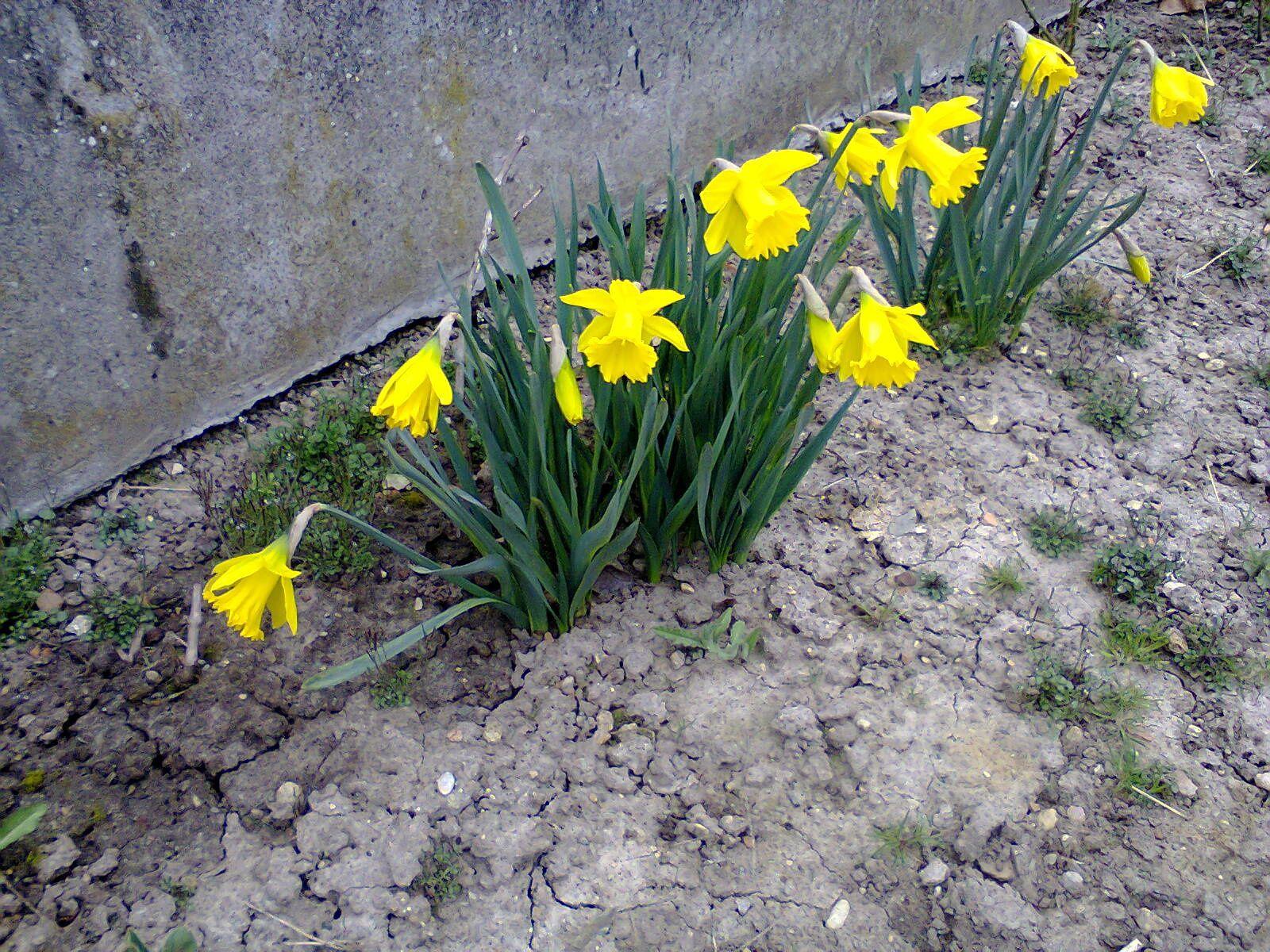 Il parait que le printemps est arrivé!......
