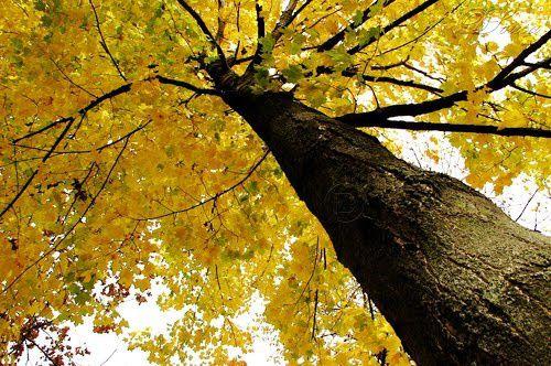 L'automne est vraiment arrivé.......