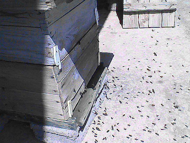 البداية في تربية النحل