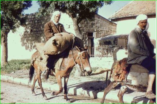 montures économiques dans la région de Gambetta 1960 (PH Paul. Lecocq de sa collection perso).