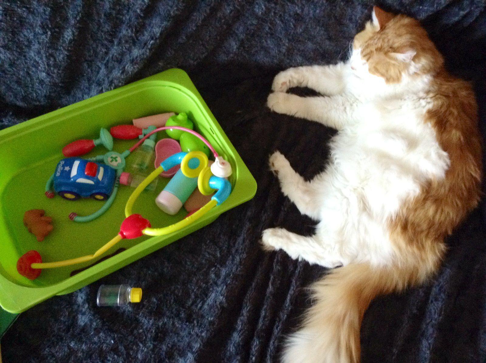 Le retour du chat (dans les bras et le coeur des enfants)
