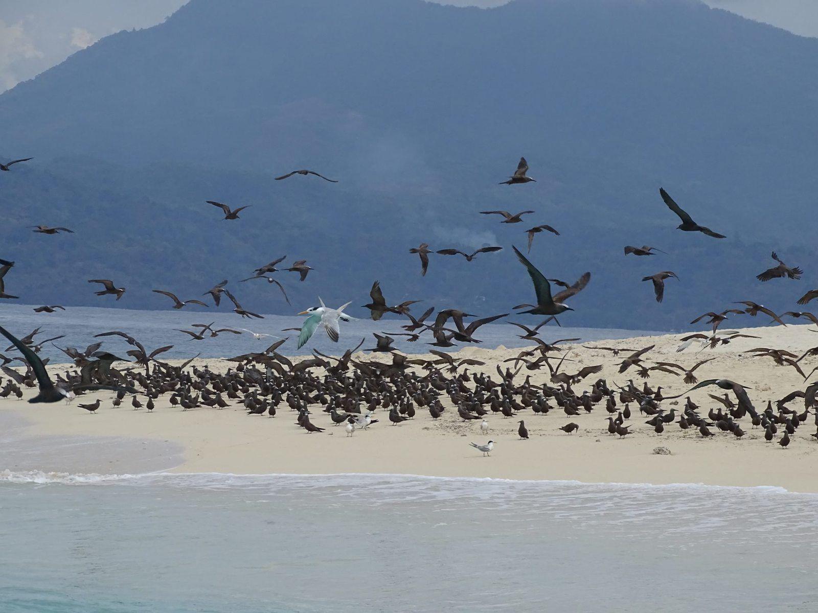Sortie îlots du sud