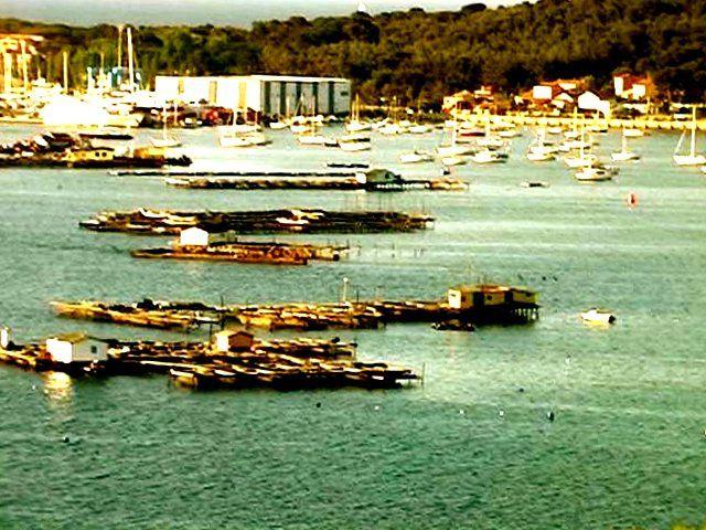 La SEYNE-sur-Mer- Baie de Toulon et au Fort de l'Eguillette, tout ce qu'il reste de mes totems, rongés par la mer