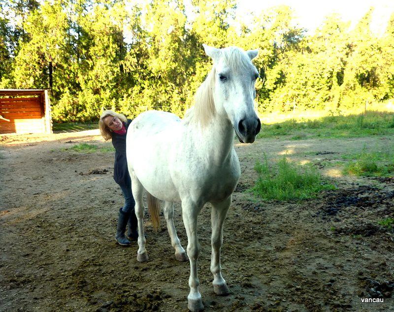 Les Cardona et leurs chevaux à Velleron ce 13 octobre