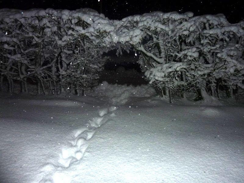 Enfouis sous la neige- Victor Horiot à Moircy en mars 2016