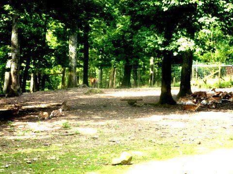 Parc à Gibier et Coin Gourmand à St Hubert  2 septembre