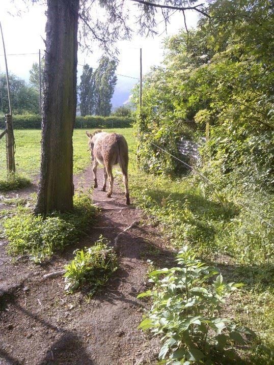 Notre 8 ème âne
