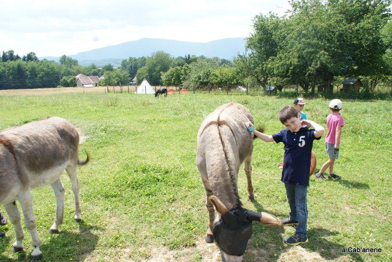 Anniversaire avec les ânes de la Cab'anerie à Belley
