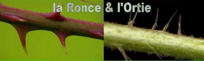 Index des plantes sauvages dans les épisodes de la Ronce et l'Ortie