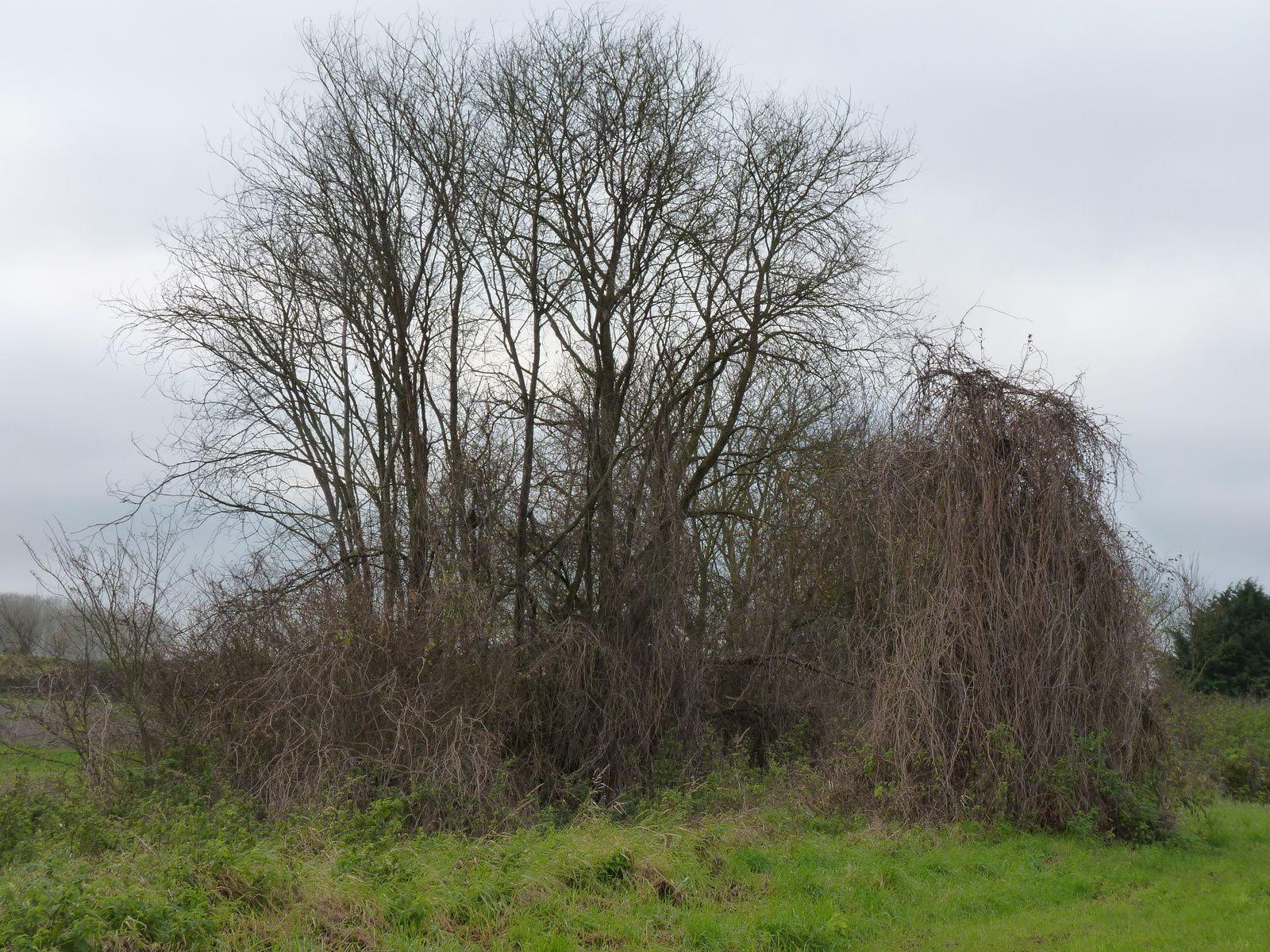 Photos prises sur la commune de Eppeville