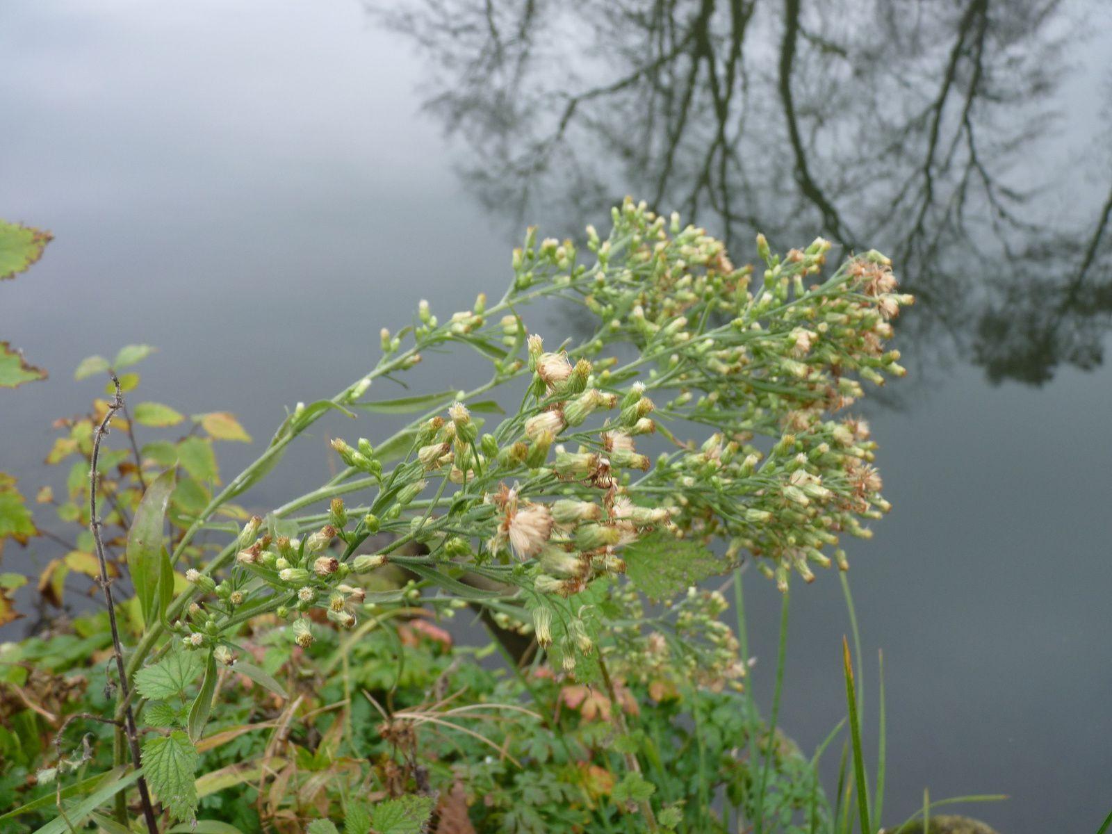 Photographies fleurs d'automne