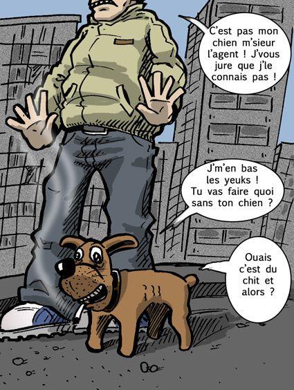 chien, teuchi, chit, canabis, police, pillon