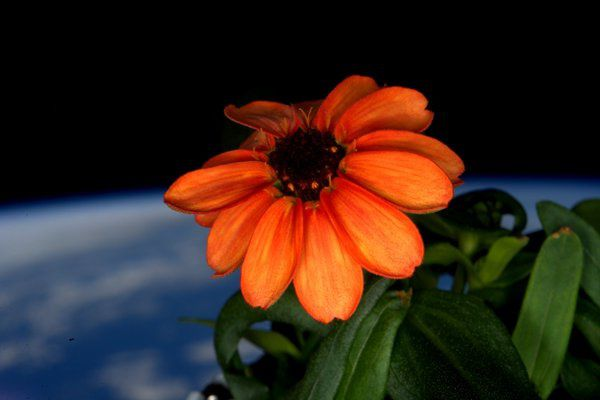 Scott kelly le premier jardinier de l'espace