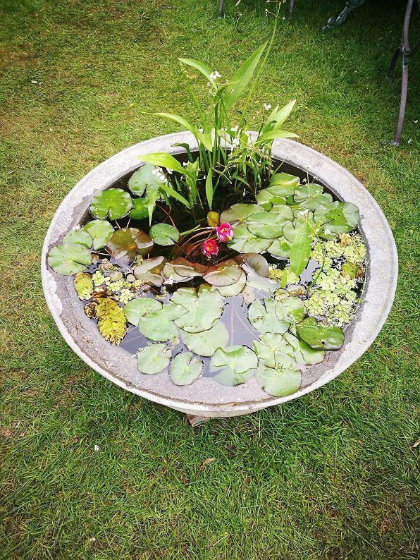Se Creer Un Mini Bassin Pour Le Balcon Passeur De Plantes