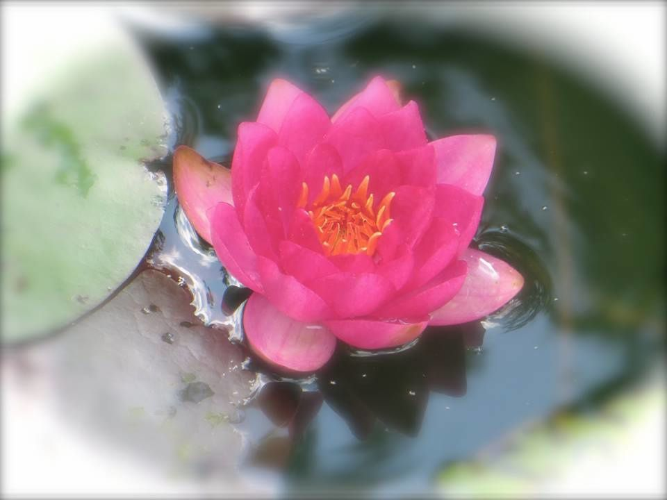 La petite fleur qui voulait progresser...