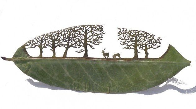 L'art de la feuille (land &amp&#x3B; leaf art)
