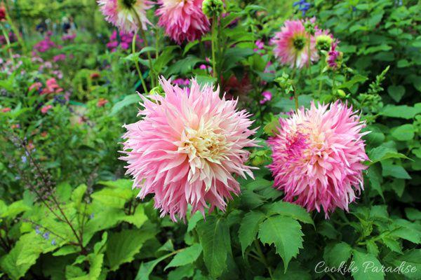 A la découverte du somptueux jardin fleuri de Giverny, l'étang des Nymphéas et la maison rose aux volets verts de Claude Monet