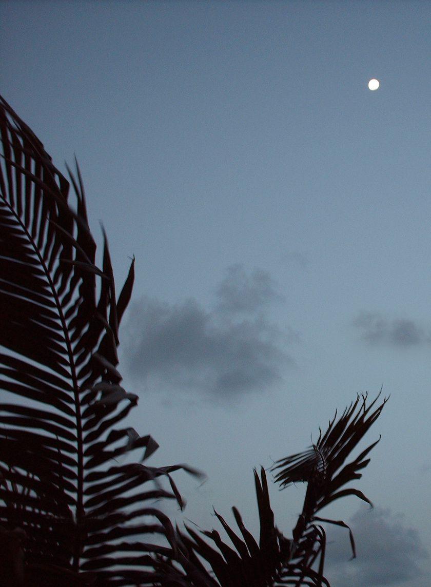 Palmier et lune