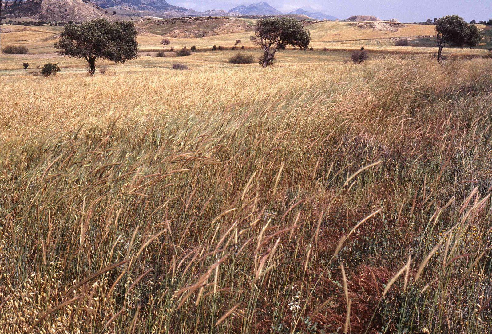 Paysage chypriote. Agios Ermolaos (Sirinevler) vers 2000. Photo E.C.