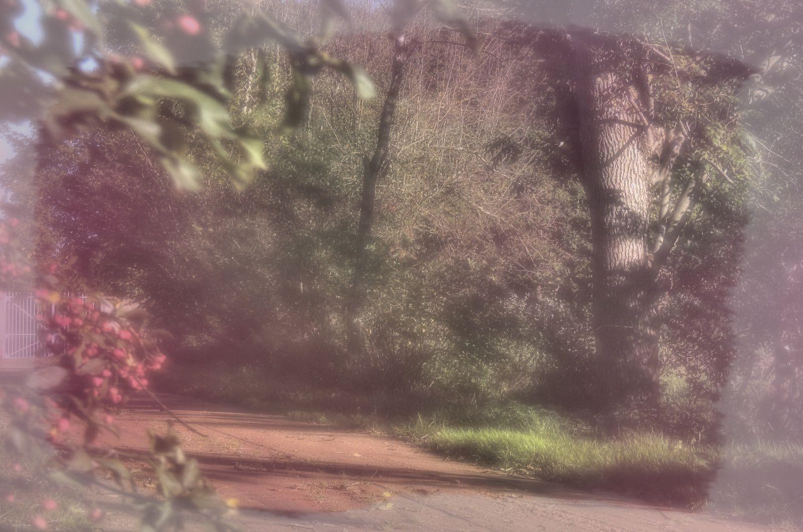 Dans les bois de St Bonnet Près Riom