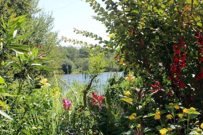 Les fleurs côté lac