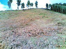 Déforestation en Afrique. Wikipedia.