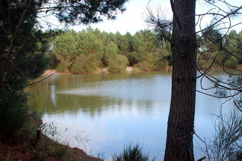 Retour à l' étang