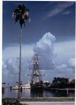 Pochette film Wikipedia. La photo : une de mes rescapées