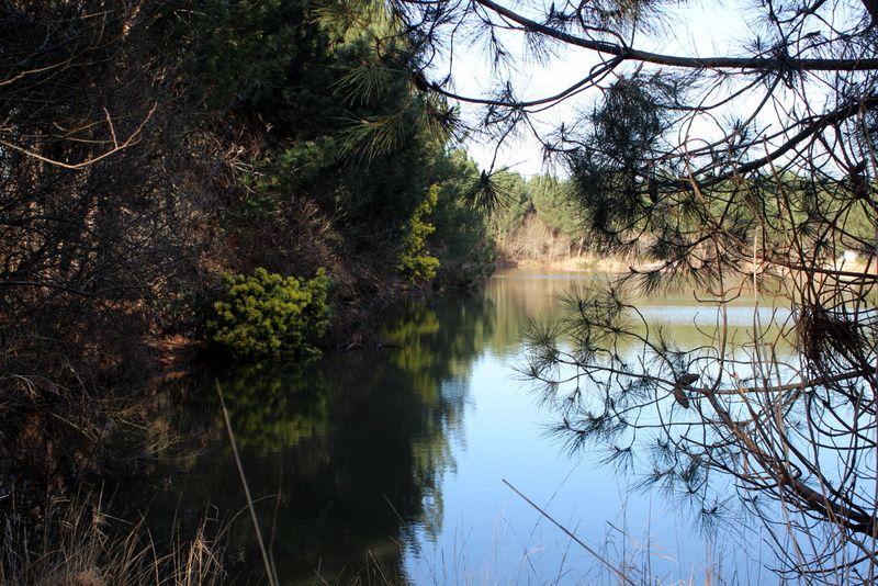 Les étangs : six mois après