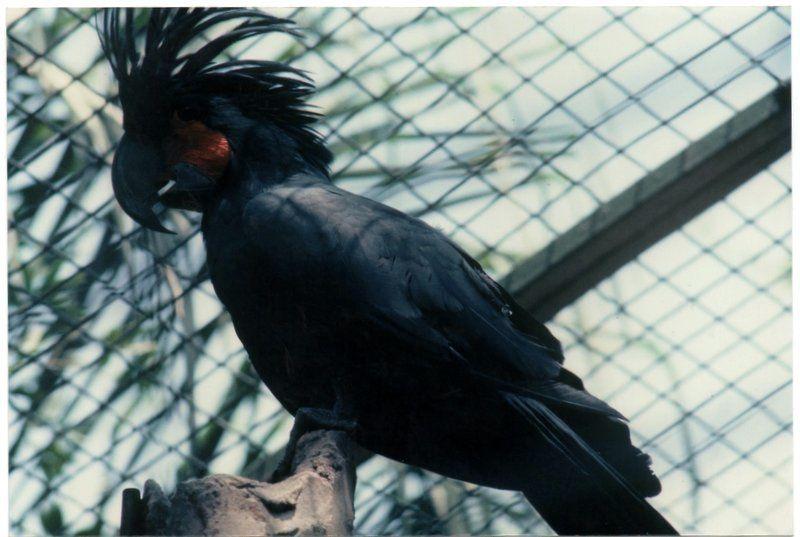 La dure vie des perroquets